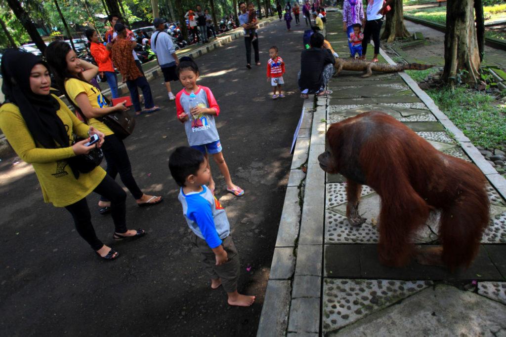 Pengunjung melihat-lihat hewan awetan koleksi Taman Satwa Taru Jurug di kawasan TSTJ Solo,