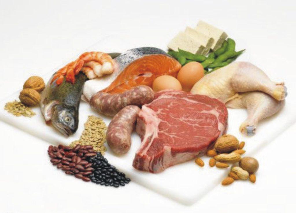 nutrisi hewani