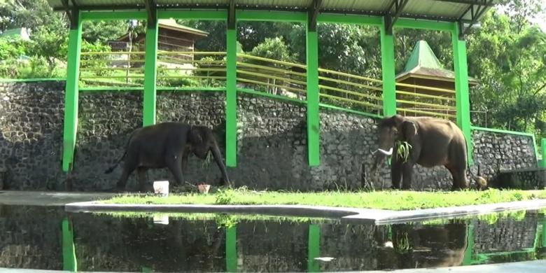 taman satwa di wisata waduk gajah mungkur wonogiri