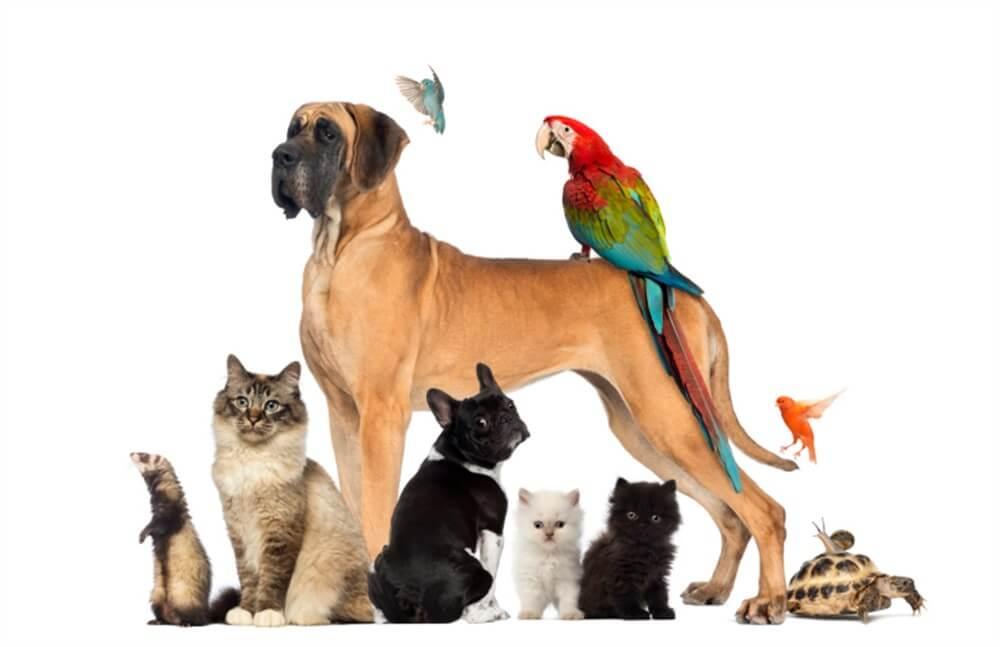 Cara Merawat Hewan Peliharaan Di Rumah Dengan Baik Dan Benar