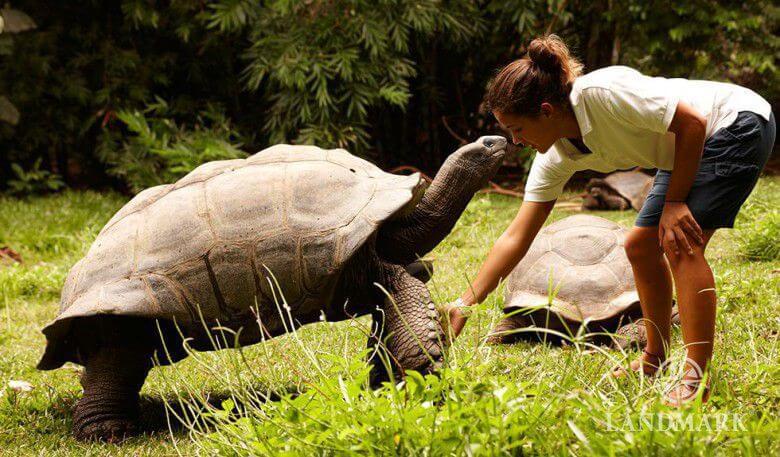 Aldabra giant sebagai kura kura terbesar dibumi