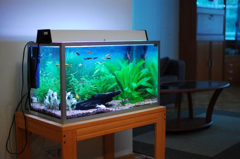 alat untuk aquarium