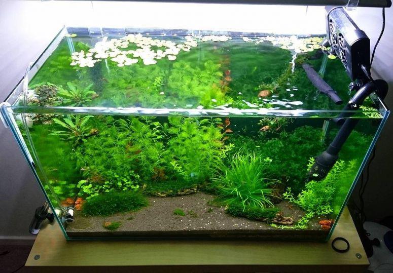 aquarium tampak dari atas
