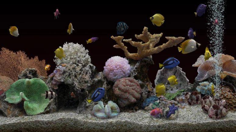 dekorasi dalam aquarium