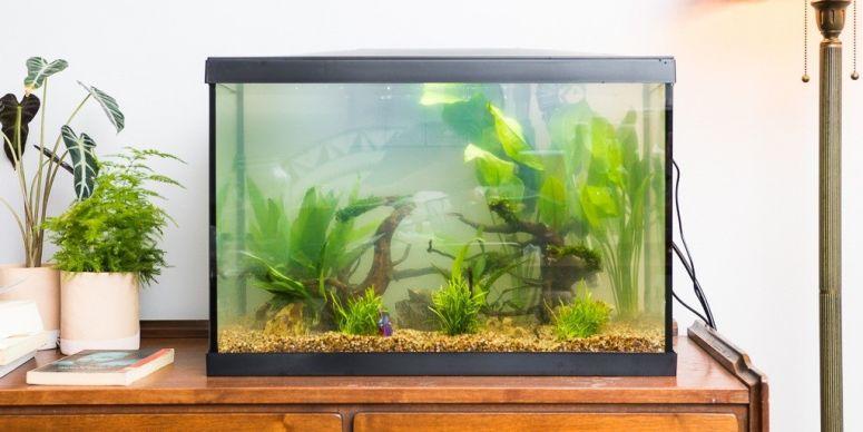 meja untuk tempat aquarium